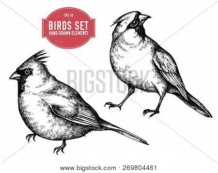 Vector Collection Of Hand Drawn Black And White Cardinal