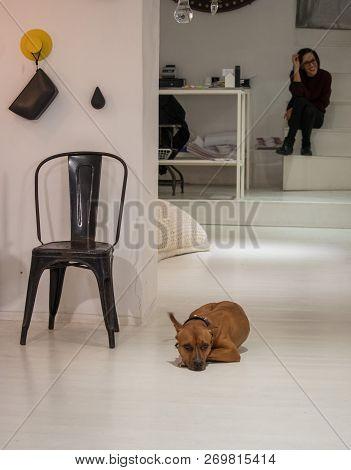 Naples, Italy - 04 November, 2018. Streetlife In Napoli. Shop With Sad Dog