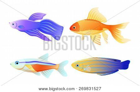 Marine Creature Color Vector Illustration Isolated On White. Betta And Gold And Neon Tetra Fish, Blu