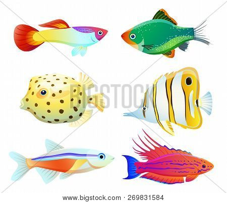 Aquarium Pet Shapes Isolated On White. Guppy And Green Tiger Barb, Neon Tetra, Filamented Flasher Wr