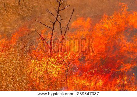 Bushfire With Details Of Flames. Grassland In Australian Outback. Dangerous Fires In Dry Season. Fir
