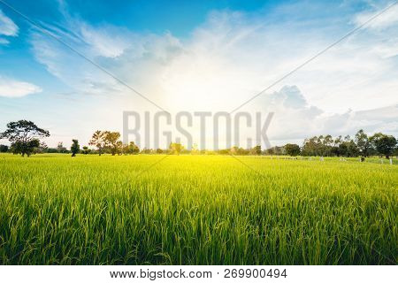 Green Terraced Rice Field Green Grass Blue Sky Cloud Cloudy Landscape Background  In The Evening And
