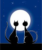 Vector Cats at night in front of moon poster