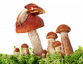 The image of a snail crawling on a group of mushrooms poster