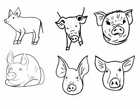 Set Of Different Muzzle Pigs. Black And White Sketch. Patterns For Brushes.