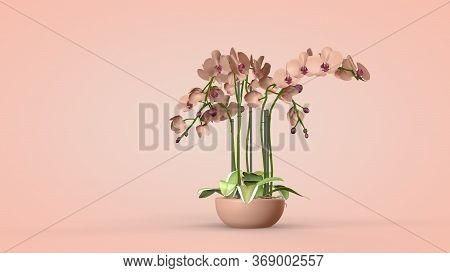 Luxurious Orchid Flowers, Interior Design, 3d Rendering