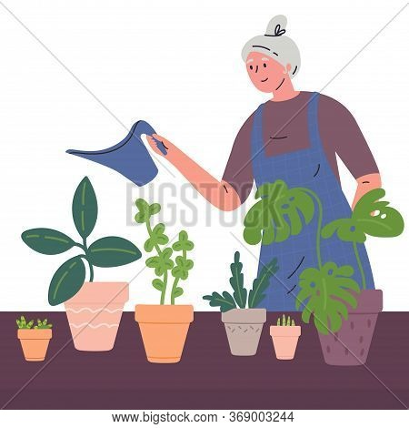 Mature Woman Watering Houseplants From A Watering Can.woman Caring For Indoor Plants.hobby.colorful