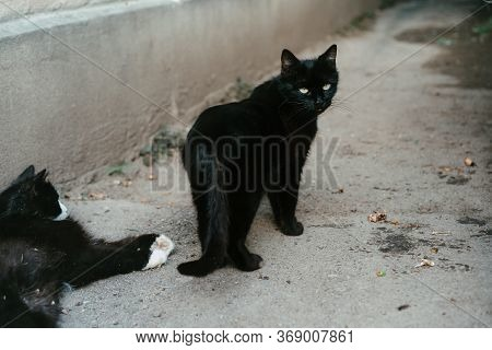 Black Stray Cat With Yellow Eyes.black Stray Cat With Yellow Eyes
