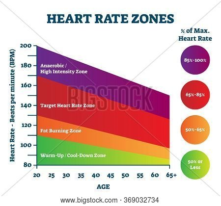 Heart Rate Zones Vector Illustration. Pulse Intensity Educational Scheme With Labeled Bpm And Age Ax
