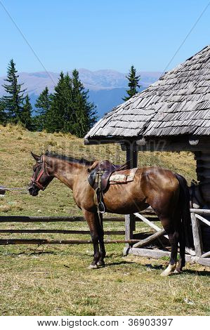 Horse in a mountain stable