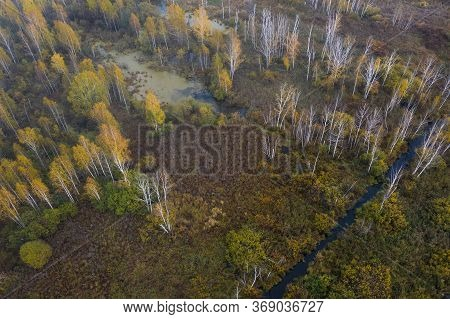 Swamp View From Drone. Swampy Landscape. View Of An Impassable Swamp From Height. Aerial Photography