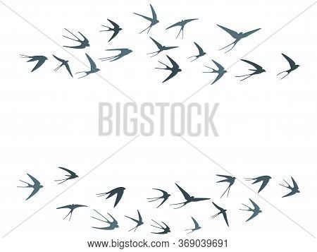 Flying Martlet Birds Silhouettes Vector Illustration. Nomadic Martlets Bevy Isolated On White. Soari