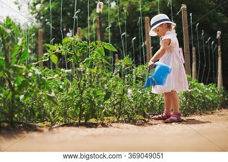 Llittle Girl Gardener Watering  Tomatoes In Green Garden. Horticulture.