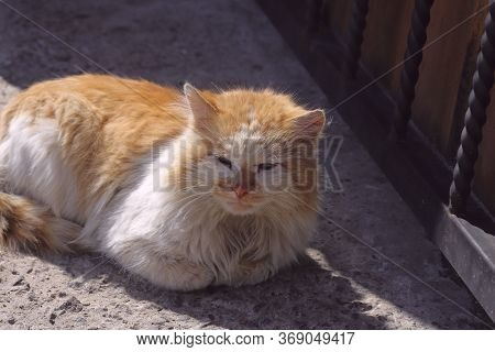 Homeless Cat Basking In The Sun. Side View Of A Dirty Orange Cat. Side View, Horizontal, Close-up. T