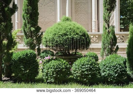 Park With Green Thuja And Boxwood Topiary Bushes, Summer Stock Photo Image Background