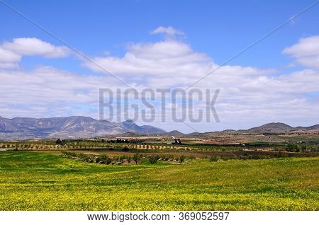 Spring Flowers In Field With The Sierra De Maria Mountains To The Rear, Puertecico, Almeria Province