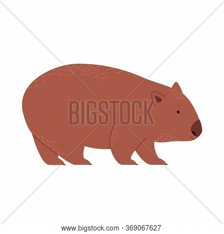 Endemic Australian Wombat. Vector Ittustration Isolated On White.