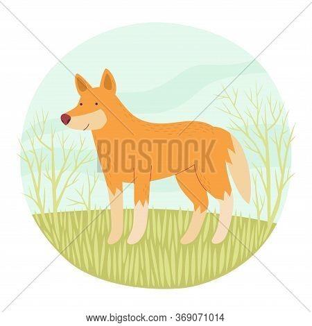 Australian Dingo. Endemic. Vector Illustration In Circle.