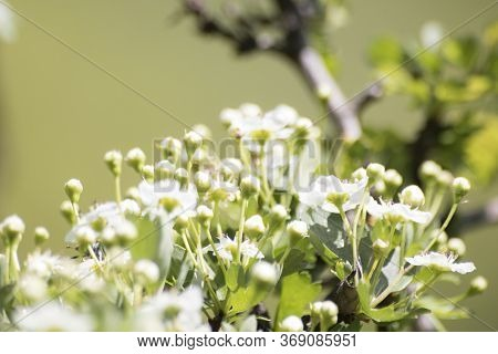 Generic White Wildflowers In A Meadow Composition