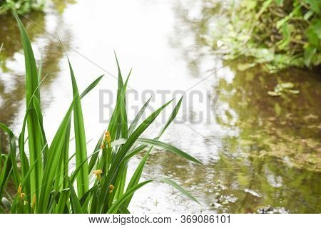 Overgrown Natural Marsh Area In Countryside With Small Stream Of Water
