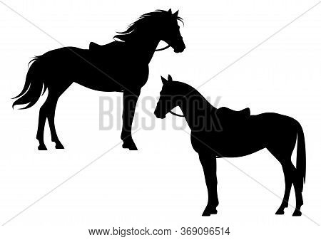 Saddled And Bridled Horse Standing Side View Ready For Riding - Equitation Black And White Vector Si