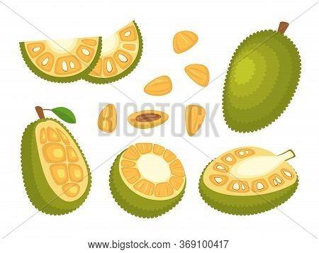 Cartoon Color Whole, Half And Pieces Fresh Jackfruit Set Exotic Fruit Concept Flat Design Style. Vec