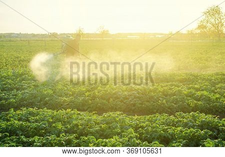 Farmer Processing A Potato Plantation With A Sprayer To Protect From Insect Pests And Fungal Disease