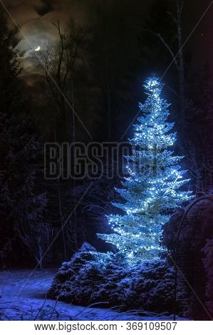 Lightened Christmas Tree Surrounded By Snow-covered Pine Trees At Night In Winter Forest. Bright Blu