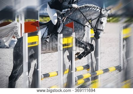 A Dappled Gray Racehorse With A Rider In The Saddle Quickly Jumps Over A High Yellow-black Barrier A