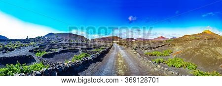 Scenic Landscape With Volcanic Vineyards. Lanzarote. Canary Islands. Spain.la Geria Vineyard On Blac