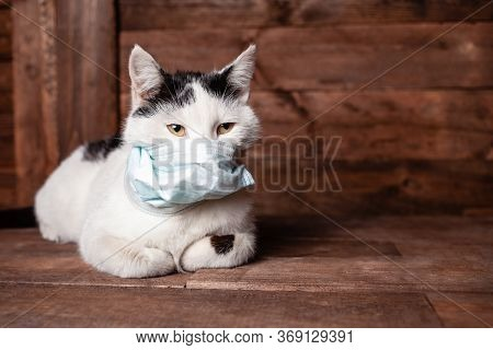 A Black And White Cat Lies On A Brown Table, All Covered In Wool. Shedding Cat. Brush For Animals, S