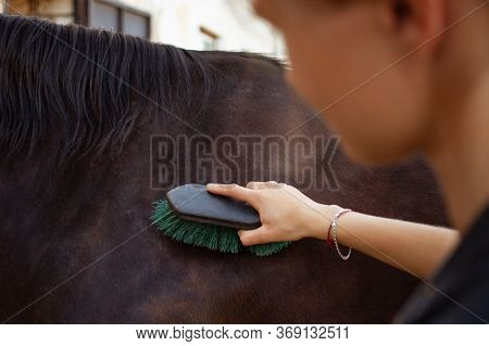 A Woman Combs And Brushes A Horse With A Brush And A Scraper. Brown Horse On A Background Of Blue Sk