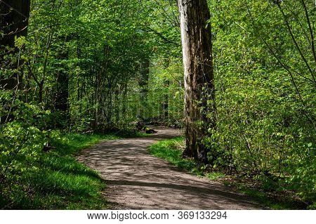 Dense, Lush, Green Forest And A Nature Trail In A National Park In Scania, Southern Sweden