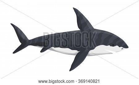 Vector Whale Shark Character. Underwater Sea Animal. Big Dangerous Marine Predator. Illustration Of