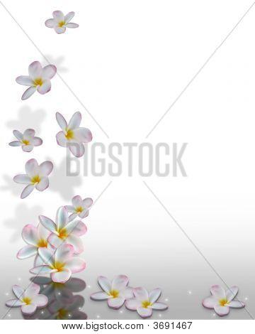 Plumeria Flowers Falling