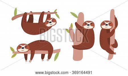 Lazy Sloths Collection. Animals On Tree. Cartoon Illustration.