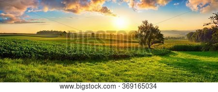 Tranquil Panoramic Rural Landscape Scenery In An Early Summer Morning After Sunrise, With A Tree On