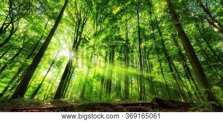 Vivid Panoramic Scenery Of Illuminated Foliage In A Lush Green Forest, With Vibrant Colors And Rays