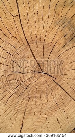 The Texture Of The Cut Tree. Cross Section Of The Tree.