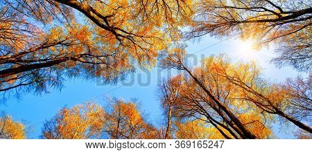 The Autumn Sun Shining Through Golden Treetops, With The Beautiful Bright Sky Looking Like A Blue Pa