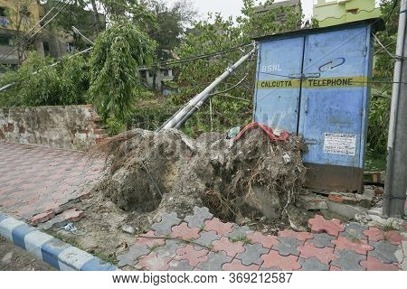 Howrah, West Bengal, India - 23rd May 2020 : Super Cyclone Amphan Uprooted Tree. The Force Destroyed
