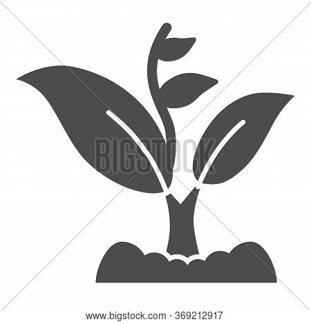 Sprout Grows With Many Leaves Solid Icon, Gardening Concept, Sprout Symbol On White Background, Grow