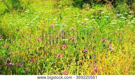 Profusion Of Spring Flowers In Green Andalusian Meadow In Bright Sunshine