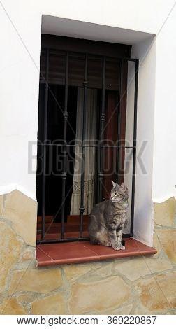 Grey Kitten Wilt Green Collar Looking At Camera