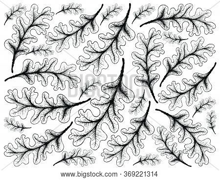 Autumn Tree, Illustration Background Of Hand Drawn Of Oak Leaves. Symbolic Tree To Show The Signs Of