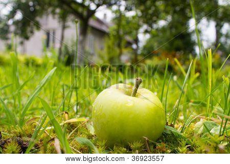 Wet Apple Near House