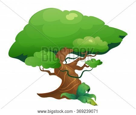 Jungle Vegetation Cartoon Vector Illustration. Rainforest Tree With Exotic Shrubes. Lush Subtropical