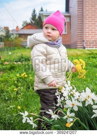 Little Baby Girl In A Warm Jacket And A Pink Hat Collects Yellow Dandelions. Happy Childhood. A Girl