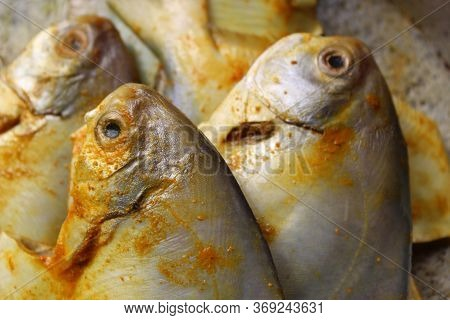 Cropped And Close View Of Sea Fish 'pomfret'.  Fresh Raw Sea Fish Ready To Cook Display With Selecti
