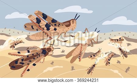Swarm Of Locusts Attacking Plants Field Vector Illustration. Insects Threatening Food Security. Pest